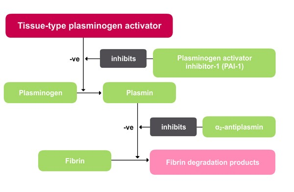 Pharmacological reperfusion Components of the fibrinolytic system Diagram showing different components of the fibrinolytic system and their regulatory affects